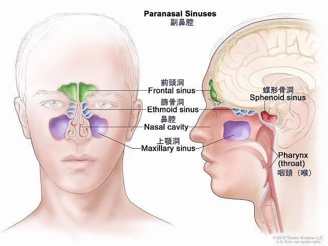 引用:http://cancerinfo.tri-kobe.org/pdq/summary/japanese.jsp?Pdq_ID=CDR0000258028